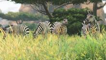 Pantalla Cabela's African Adventures