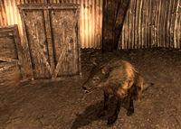 Bethesda remember the dogs of Fallout saga