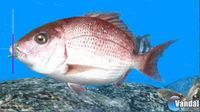 Pantalla Reel Fishing Ocean Challenge WiiW
