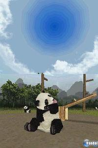 National Geographic Panda