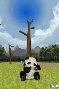 Pantalla National Geographic Panda