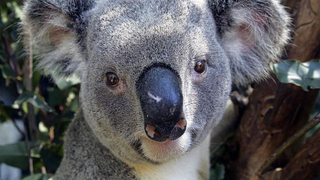 Dead or Alive: Dimensions llegará a Australia