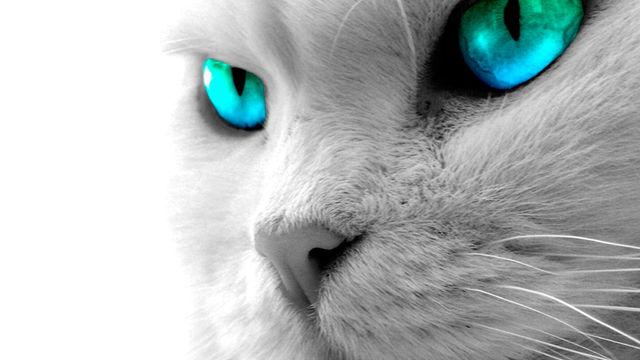 Juegos para gatos en el iPad