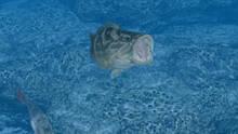 Imagen 2 de Reel Fishing Ocean Challenge WiiW