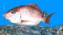 Imagen 3 de Reel Fishing Ocean Challenge WiiW