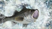 Imagen 5 de Reel Fishing Ocean Challenge WiiW