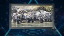 Trials of the Illuminati: Amazing Wildlife Jigsaws