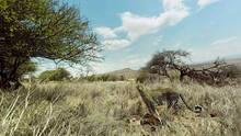 Virry VR: Wild Encounters