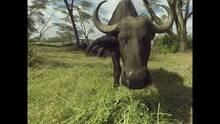 Imagen 65 de Virry VR: Wild Encounters
