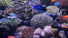 Imagen 1 de Buceo en la gran barrera de coral de David Attenborough