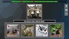 Imagen 1 de Repeat the image: Animals