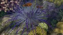 Imagen 30 de Endless Ocean 2: Adventures Of The Deep