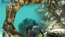 Imagen Ecco the Dolphin